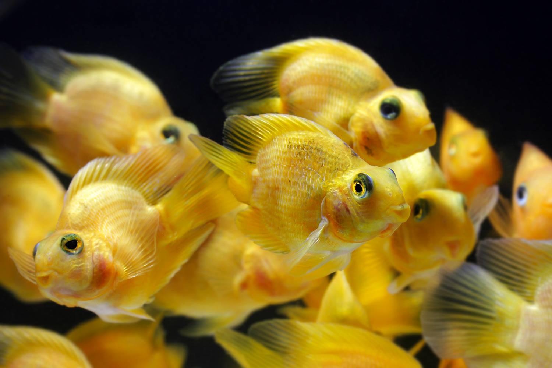 ปลาสวยๆ