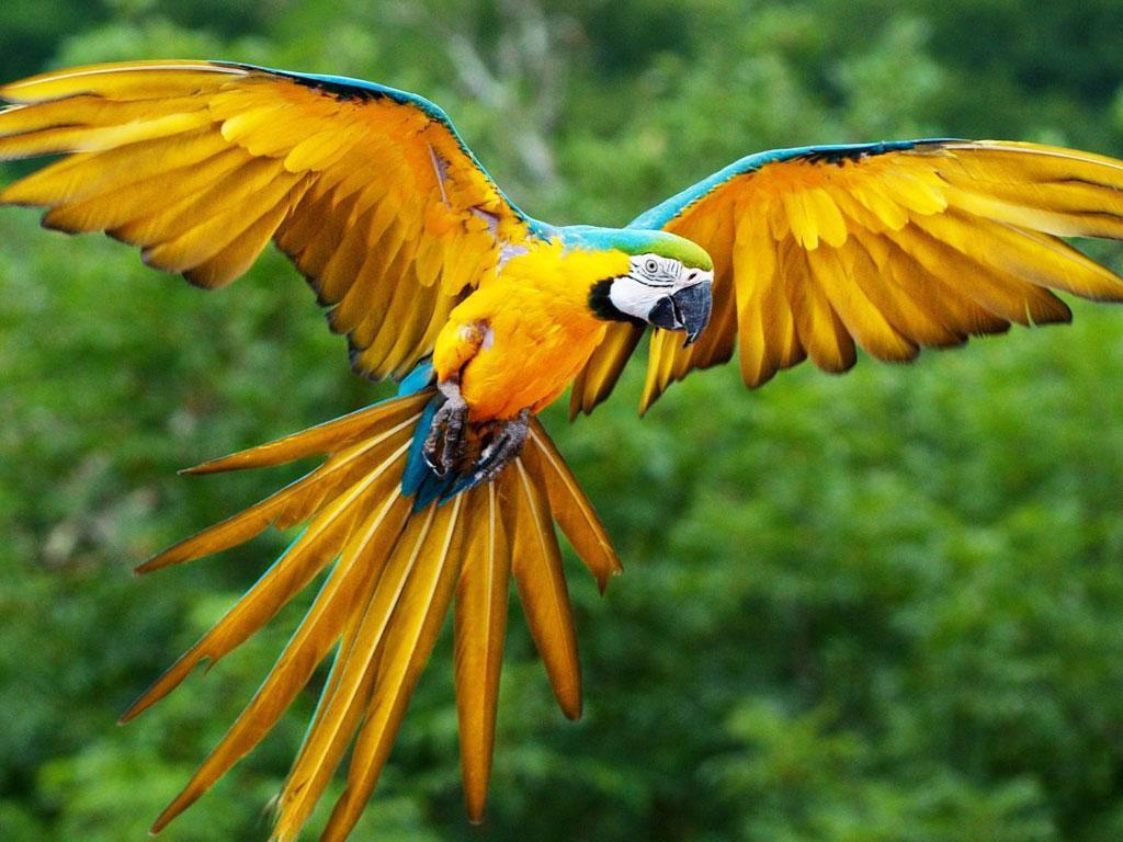 นกบิน